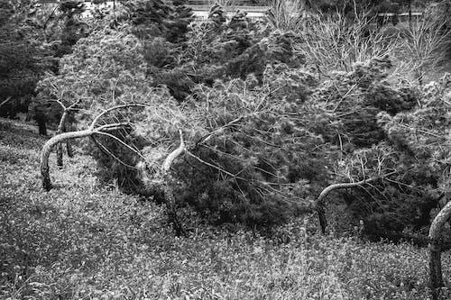 Безкоштовне стокове фото на тему «Буря, дерево, парк»