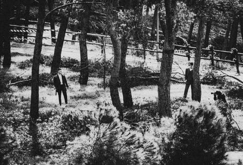 Безкоштовне стокове фото на тему «дерево, ліс, піки»