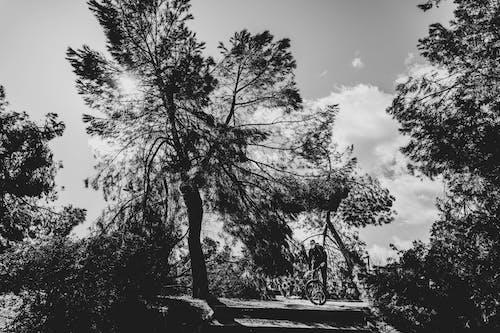 Безкоштовне стокове фото на тему «велосипед, дерево, небо»