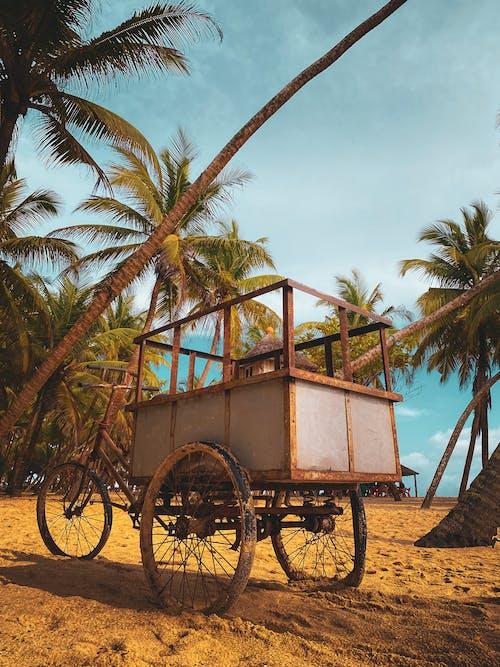 Free stock photo of beach, cart, coconut