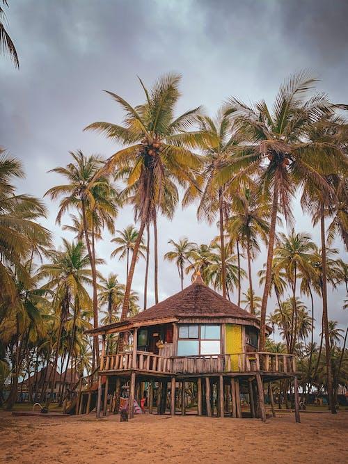 Free stock photo of beach, coconut, hotel