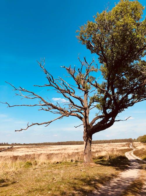 Free stock photo of beautiful nature, beauty in nature, bluesky