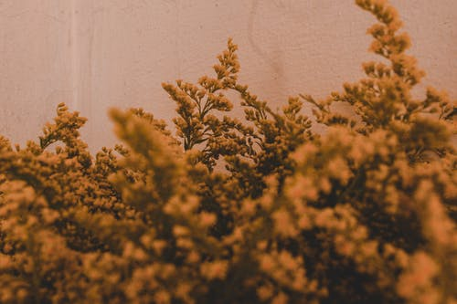 Yellow flowers growing on branches of lush abundant blooming plant near concrete wall