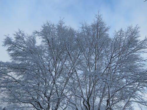 Free stock photo of tree covered in snow, tree in snow, winter