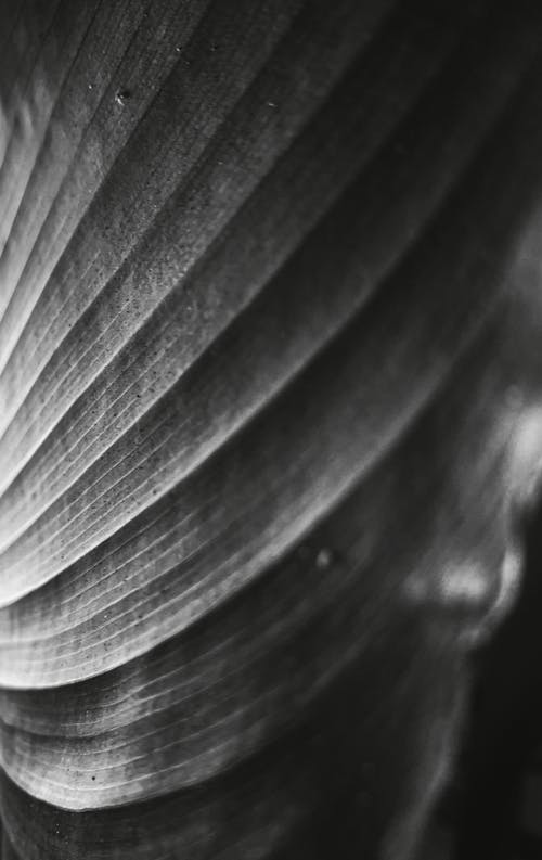 Бесплатное стоковое фото с bnw, h2o, абстрактный