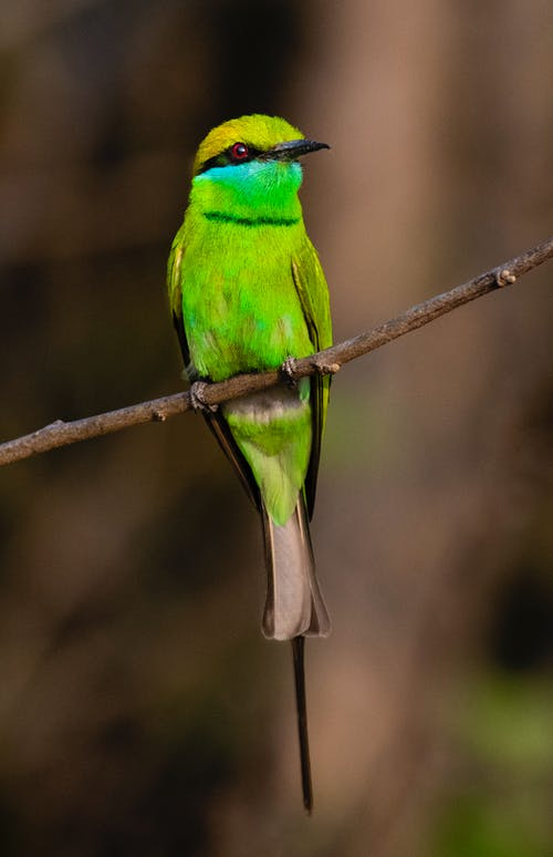 Colorful bee eater with colorful plumage sitting on tree branch against blurred environment