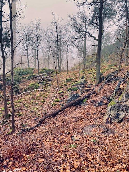 Foto profissional grátis de árvores, cores de outono, cores outonais