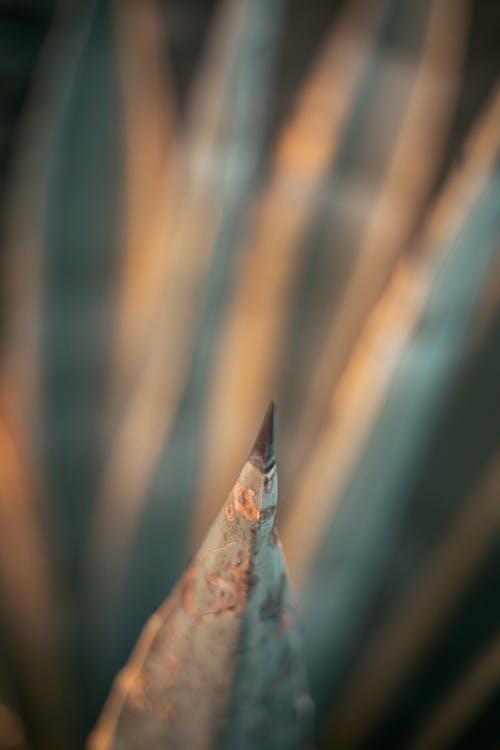 Free stock photo of 2020 wallpaper, beautiful, cacti