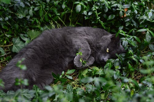 Close-Up Photo of a Gray Cat Lying on Green Leaves