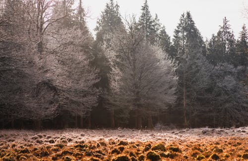 Free stock photo of cold, dawn, fall