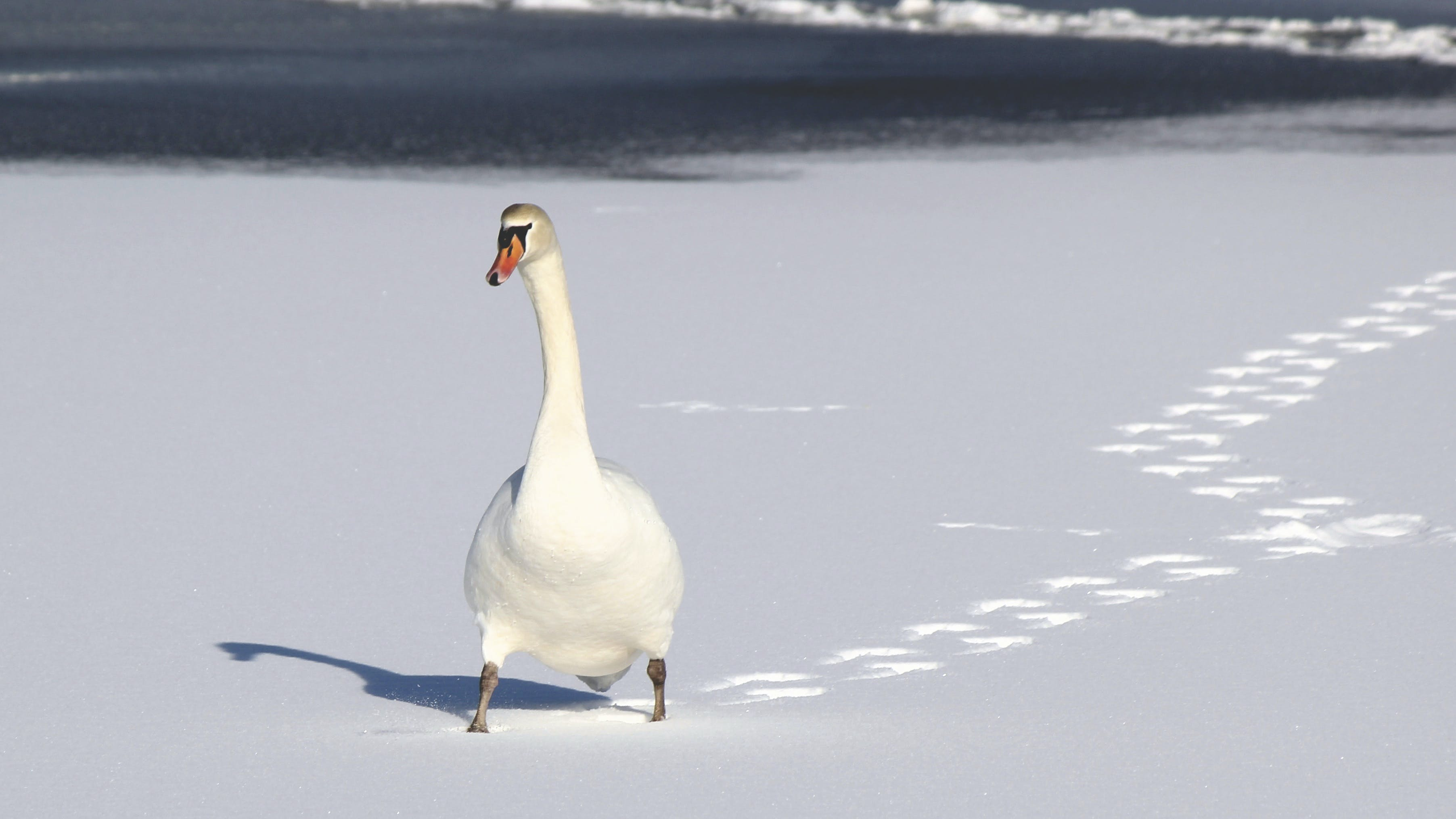 White Duck on White Sand
