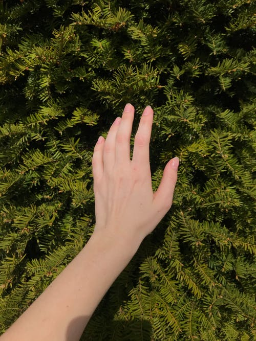Woman touching branches of coniferous plant