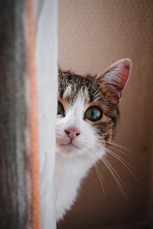 Fotos de stock gratuitas de animal, bigotes, doméstico