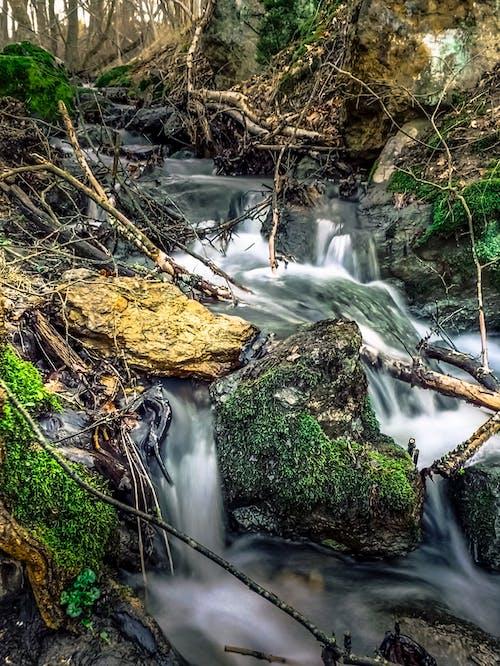 Foto profissional grátis de animais selvagens, cachoeira, cascata