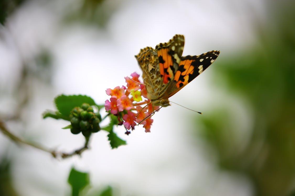 hmyz, kvet, lupene