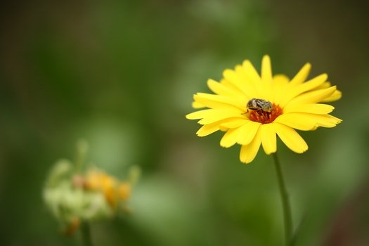 Brown Insect on Yellow Multi Petaled Flower in Macro Shot Photography