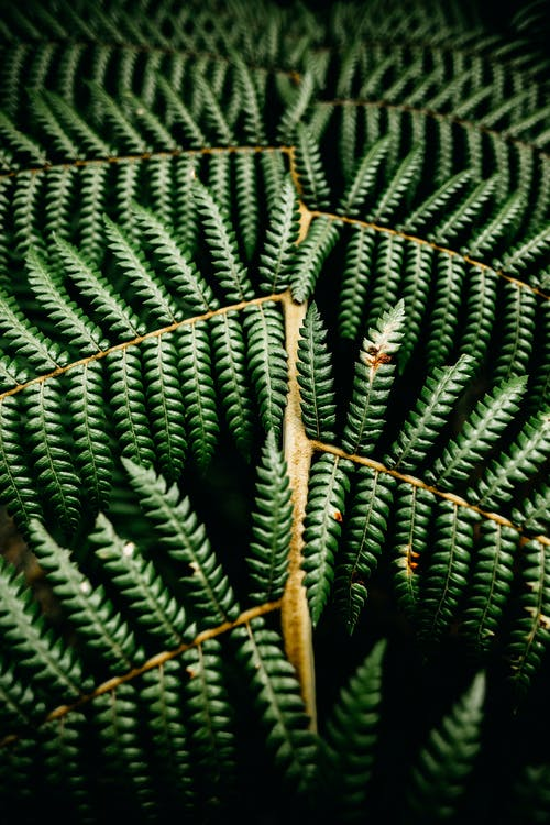 Imagine de stoc gratuită din abundență, afară, arbust