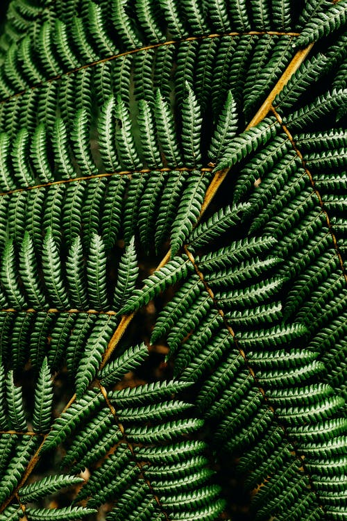 Green fern leaves in nature