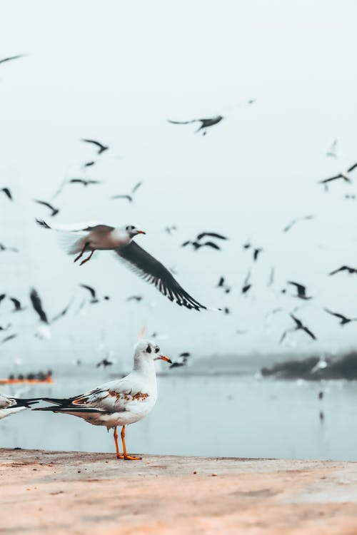 Birds flying over sea and shore