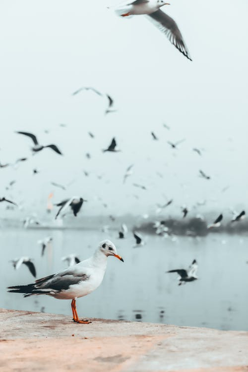 Side view of wild bird with white plumage and pointed beak standing on coast of sea on blurred background of flying seagulls