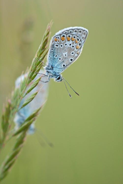 Бесплатное стоковое фото с бабочки, завод, насекомые, снимок крупным планом