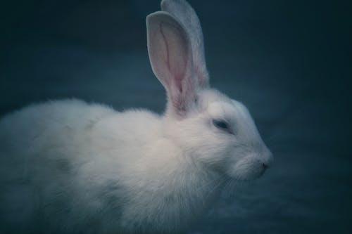 Gratis arkivbilde med dyr, dyreliv, hare, hvit