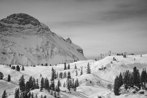 Immagine gratuita di alpi, austria, bianco e nero, inverno