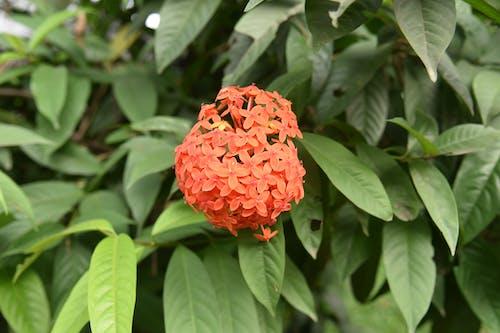 Бесплатное стоковое фото с красивый цветок