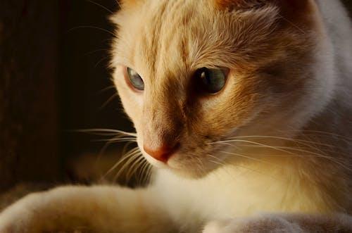 가정의, 고양이, 동물, 반려동물의 무료 스톡 사진