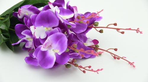 Бесплатное стоковое фото с ботанический, букет, бутоны, красивый