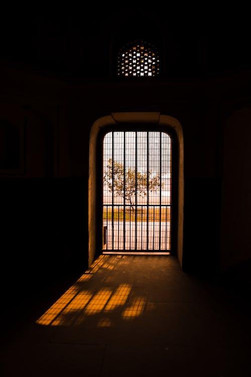 Immagine gratuita di alberi spogli, albero, cancello