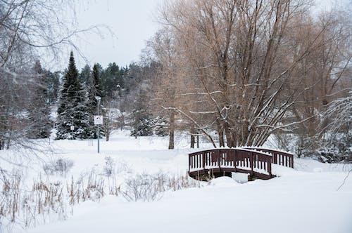 Kostnadsfri bild av bro, finland, kall