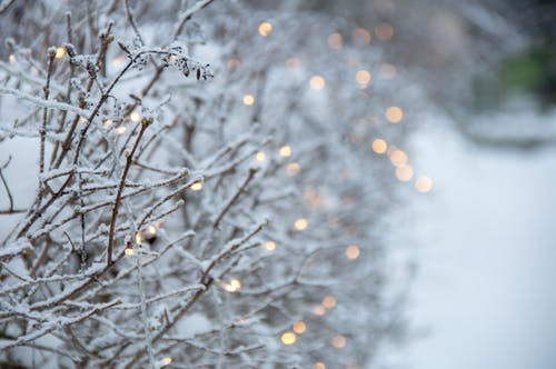 Free stock photo of bokeh, cold, Finland
