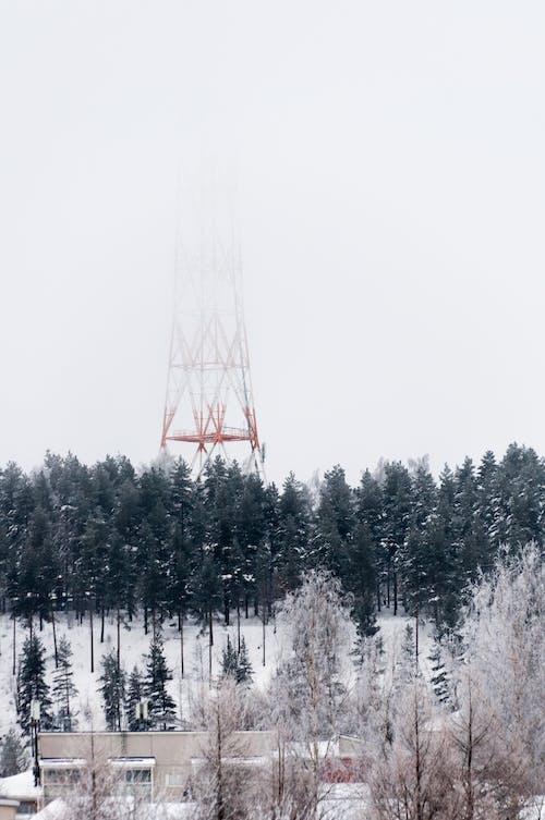 Kostnadsfri bild av dimma, finland, frost