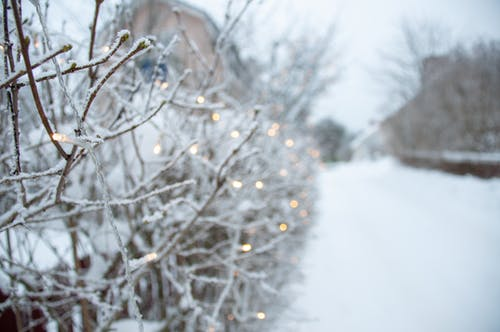 Kostnadsfri bild av bokeh, finland, kall