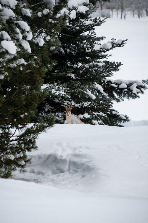 Kostnadsfri bild av djur, finland, hare
