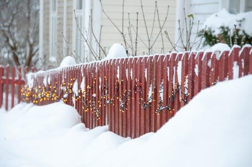 Kostnadsfri bild av falla, färg, finland