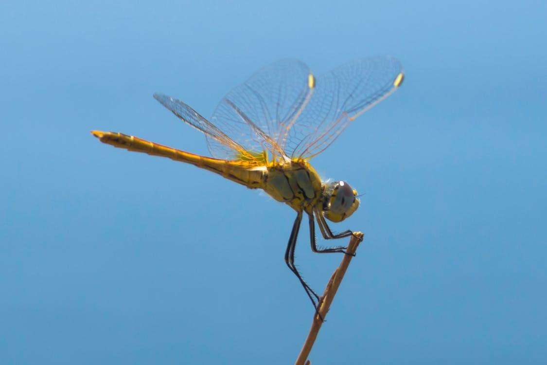 Základová fotografie zdarma na téma dračí křídlo, duchovní úroveň, hmyz