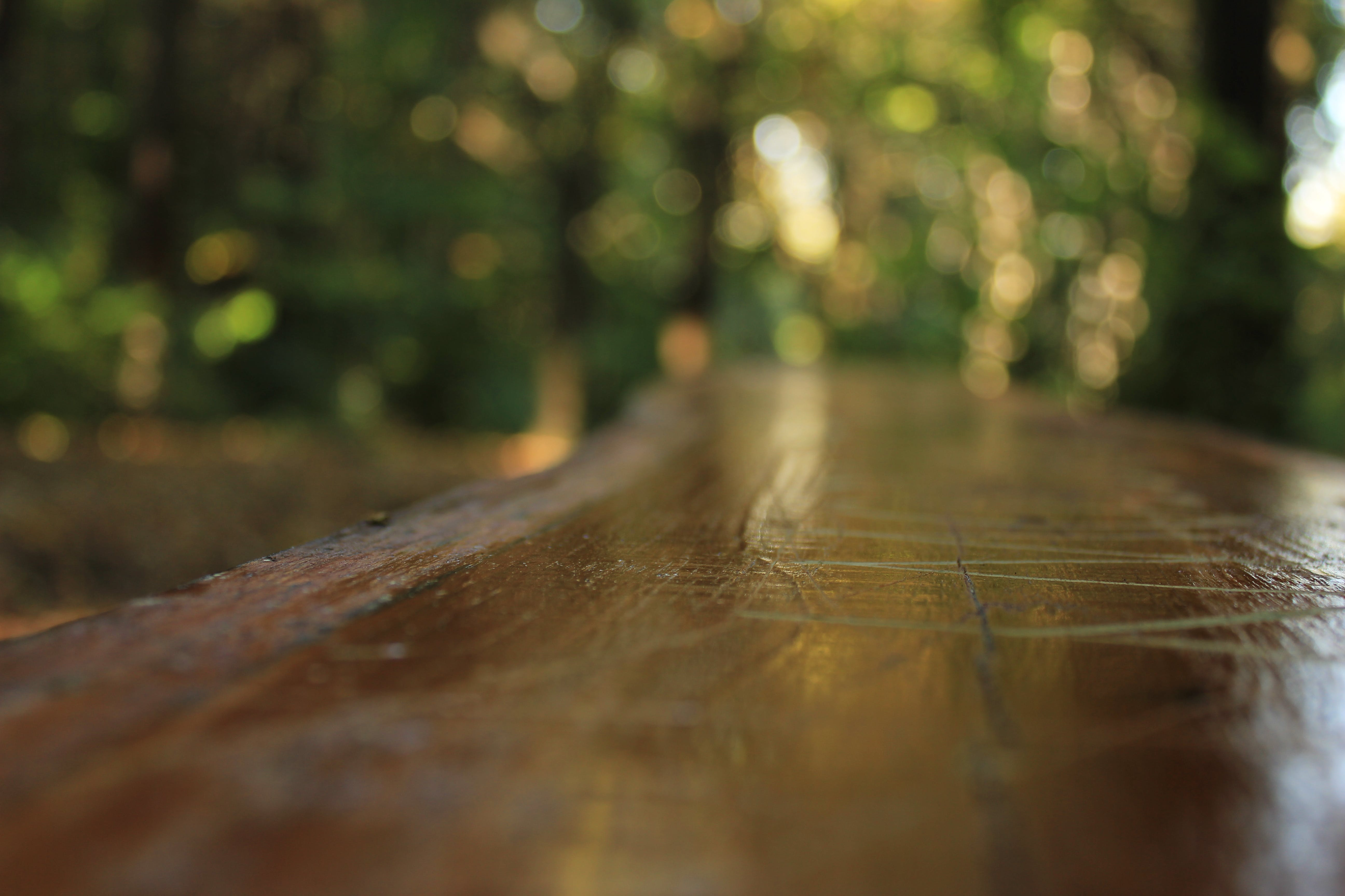 Free stock photo of bench, bench in forest, forest, park