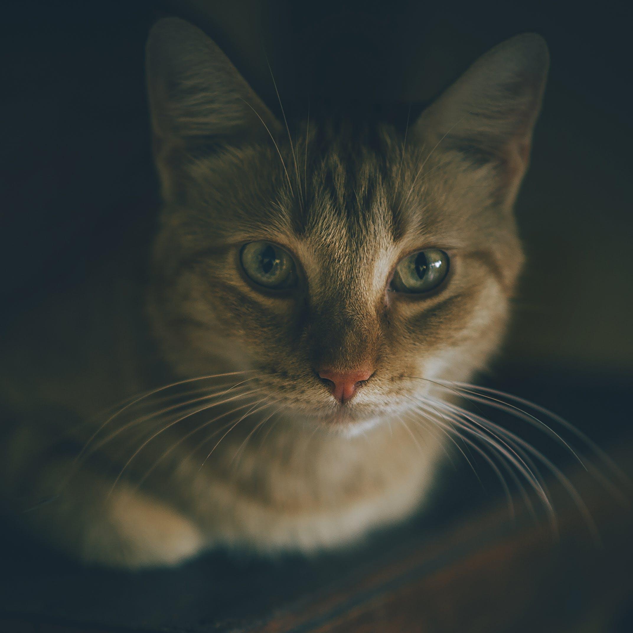 Kostnadsfri bild av däggdjur, djur, djurfotografi, grå