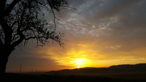 Ingyenes stockfotó ég, este, fa, felhők témában