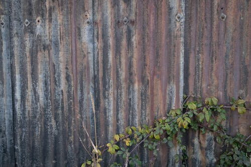 Green Plant Beside Brown Wooden Fence