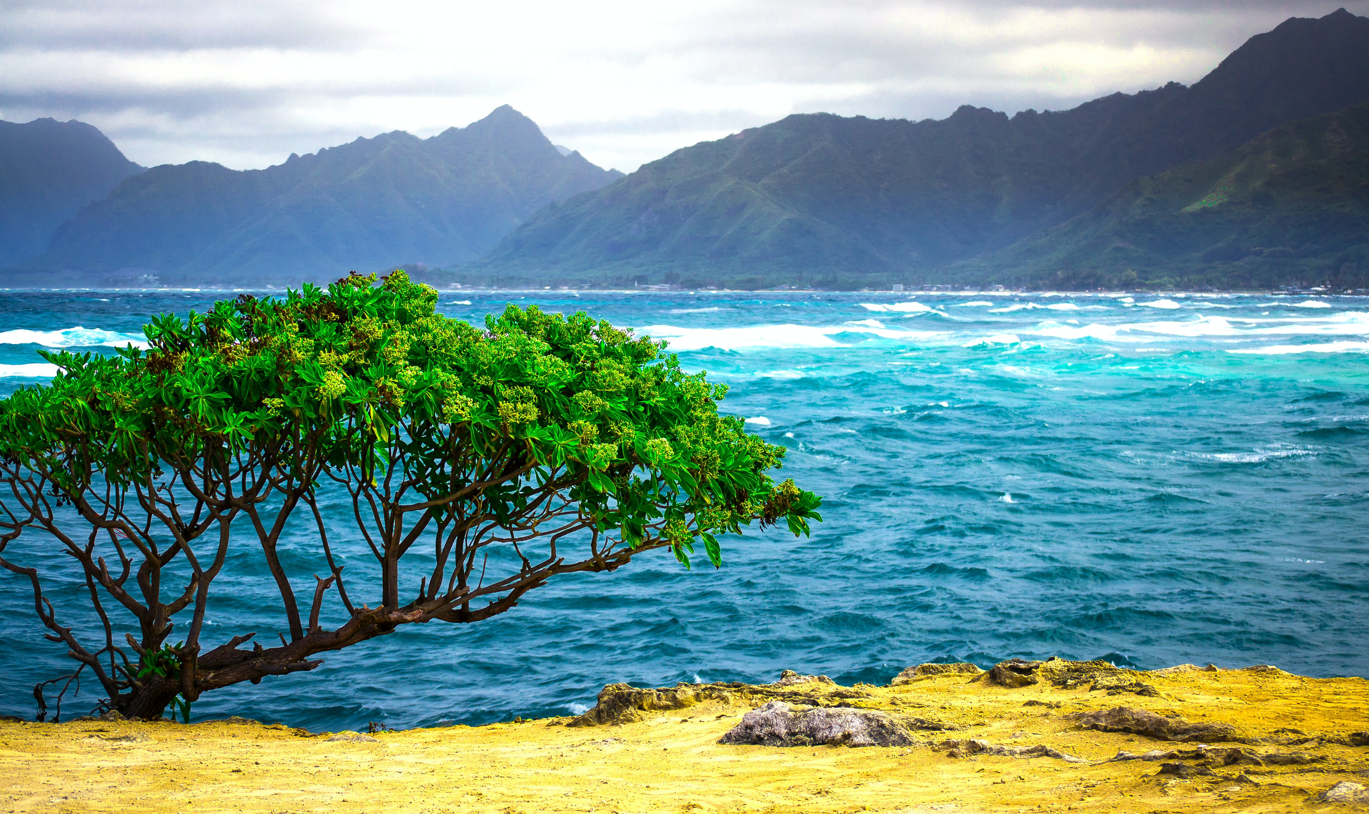 Free stock photo of hawaii, landscape, nature, ocean
