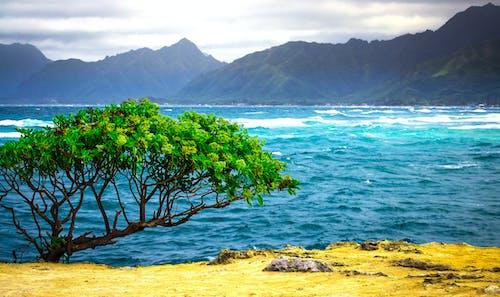 Ingyenes stockfotó hawaii, óceán, tájkép, természet témában