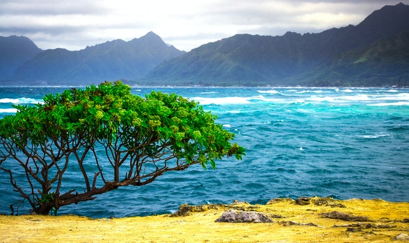 Free stock photo of landscape, nature, ocean, hawaii