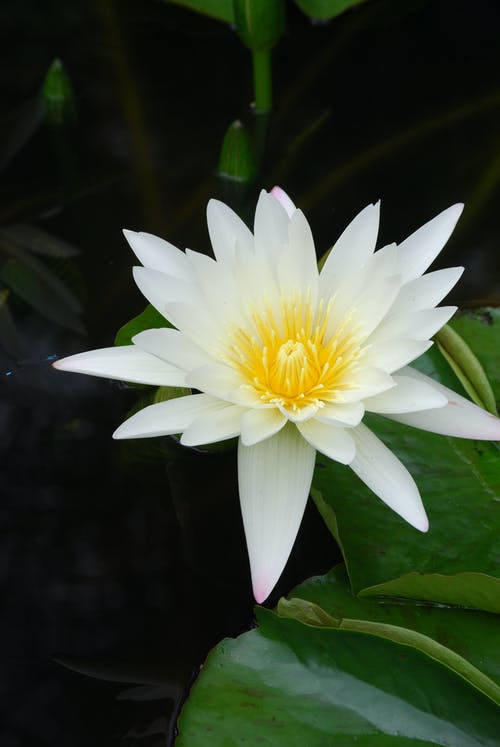 White and Yellow Flower in Bloom