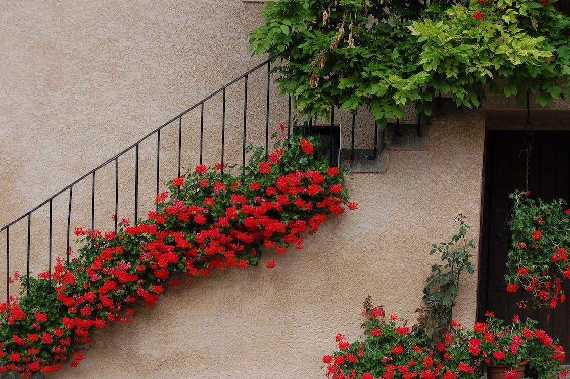 kvet, schodisko, schody