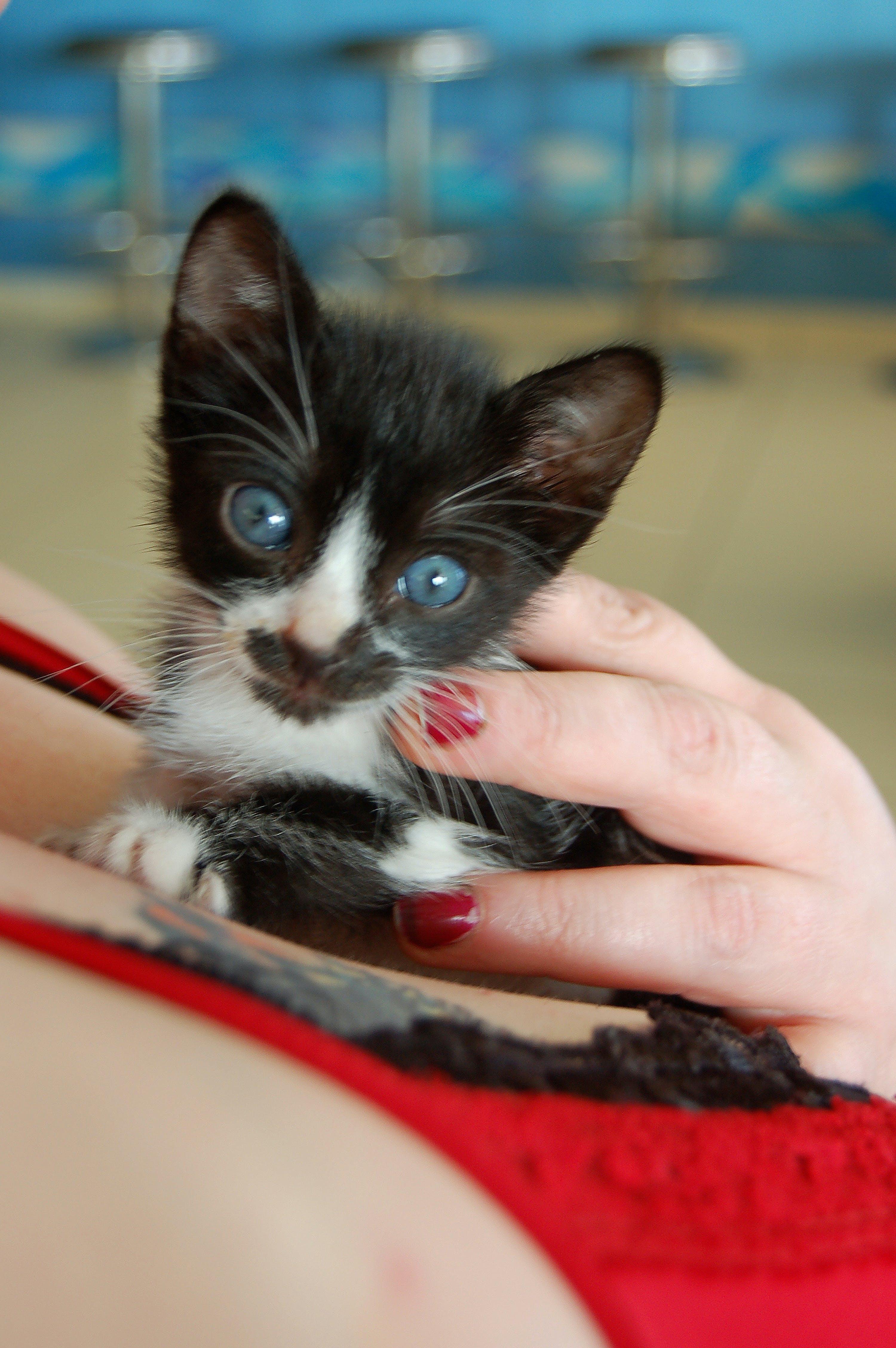 Základová fotografie zdarma na téma kočka, mladá kočka