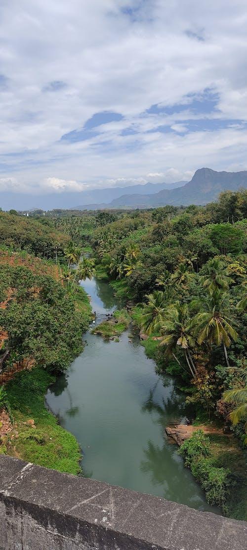 Fotos de stock gratuitas de acueducto, árbol, belleza de la naturaleza