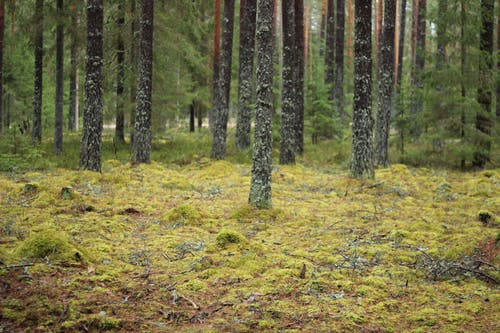 Free stock photo of forest, moss, nature